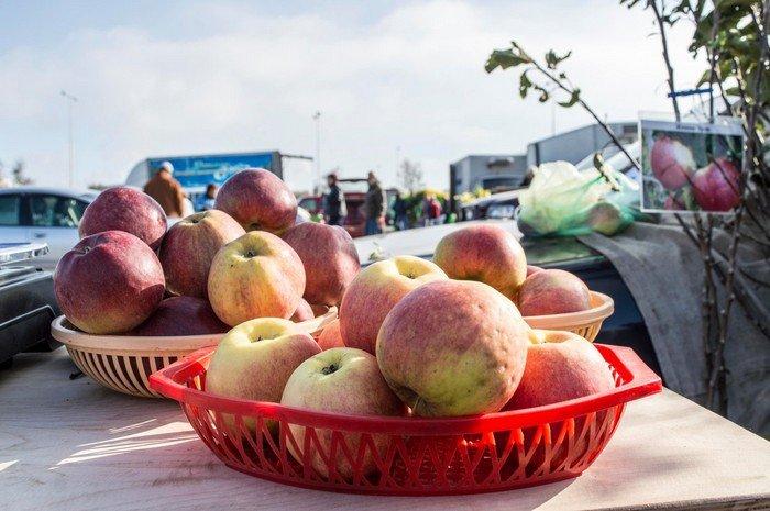 Сладкий мед, вкусные яблоки и пушистые кролики: в Гродно прошла выставка-ярмарка «Агроосень-2016», фото-9