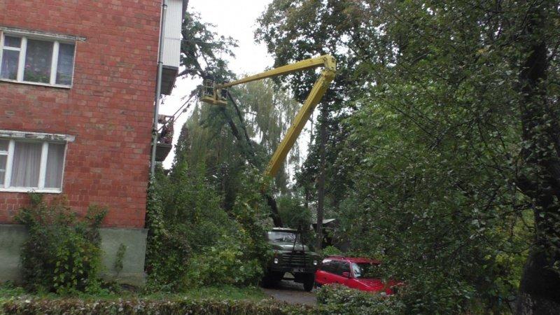 Через непогоду у Чернівцях дерево впало на багатоповерхівку (ФОТО), фото-2