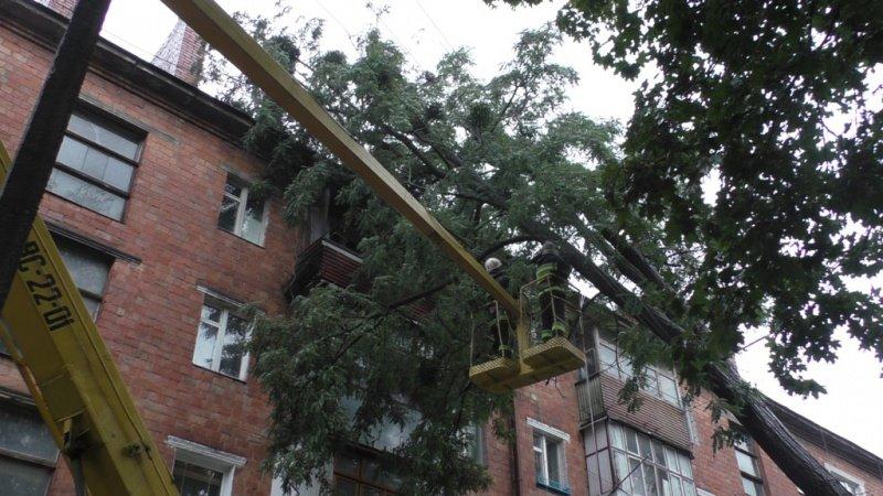 Через непогоду у Чернівцях дерево впало на багатоповерхівку (ФОТО), фото-1