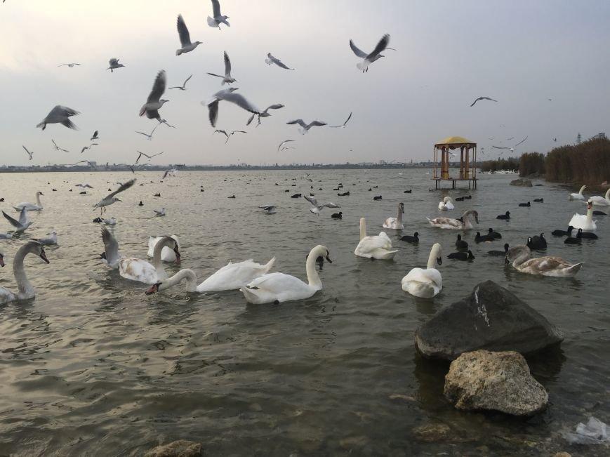 """Евпаторийское озеро превратилось в """"лебединое"""" (ФОТО), фото-8"""