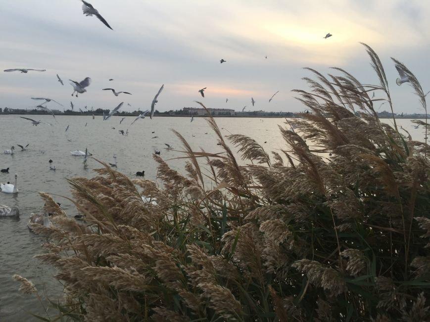 """Евпаторийское озеро превратилось в """"лебединое"""" (ФОТО), фото-7"""