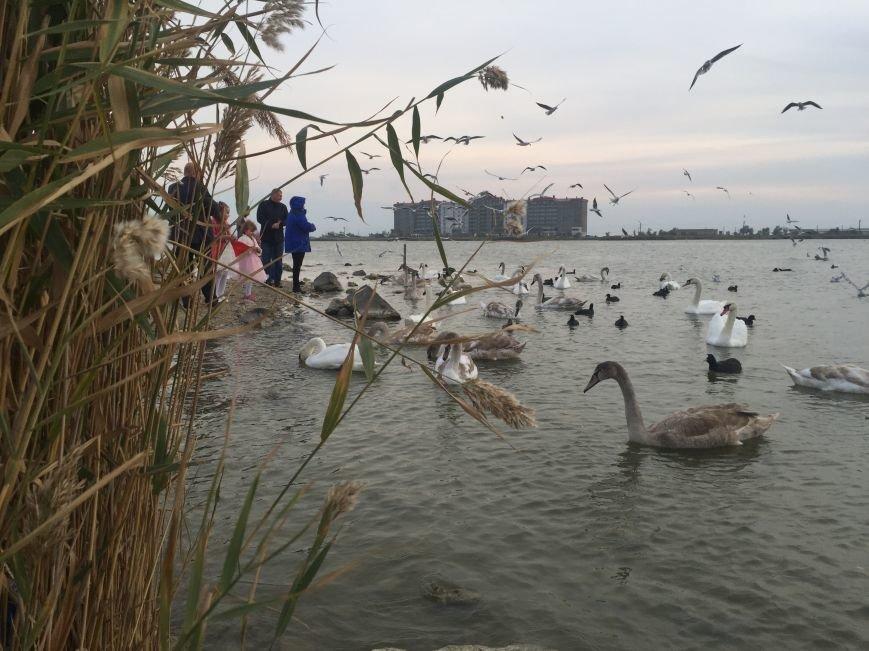"""Евпаторийское озеро превратилось в """"лебединое"""" (ФОТО), фото-2"""