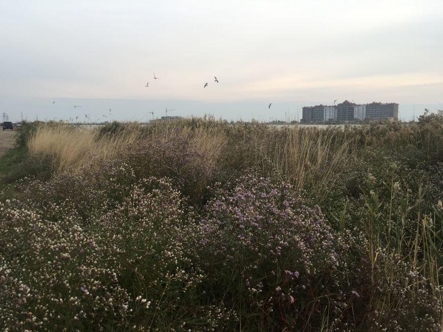 """Евпаторийское озеро превратилось в """"лебединое"""" (ФОТО), фото-15"""