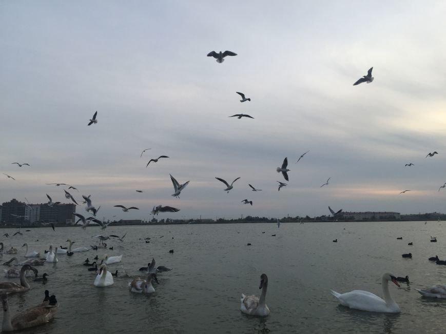 """Евпаторийское озеро превратилось в """"лебединое"""" (ФОТО), фото-3"""