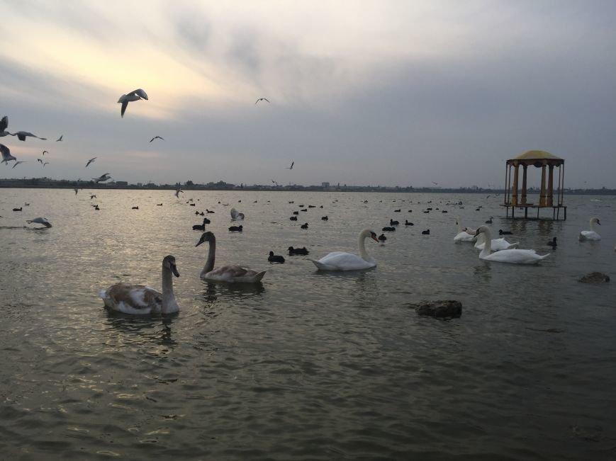 """Евпаторийское озеро превратилось в """"лебединое"""" (ФОТО), фото-6"""