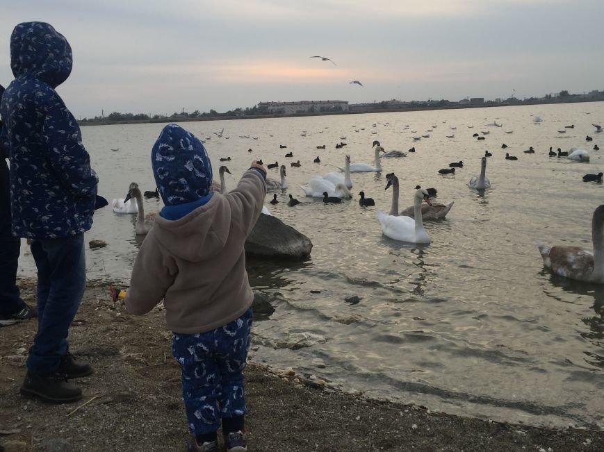 """Евпаторийское озеро превратилось в """"лебединое"""" (ФОТО), фото-12"""