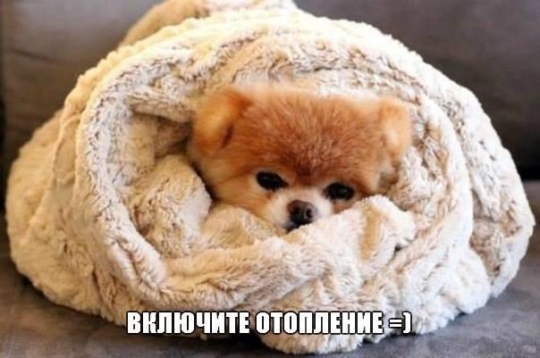 Включите отопление: пока в квартирах Днепра холодные батареи, в соцсетях появились фотожабы, фото-1