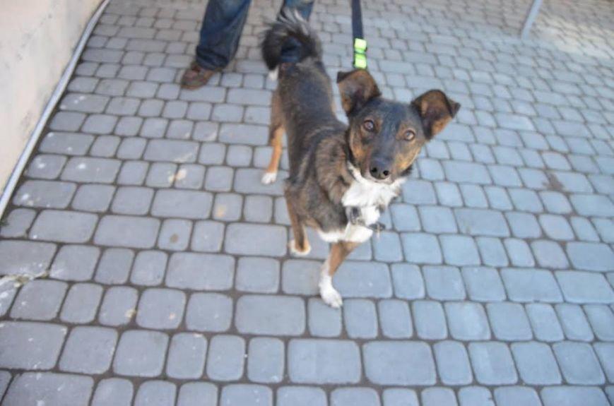 «Вони чекають на тебе в ЛКП «Лев »: 7 собак, які цього тижня шукають господаря (ФОТО), фото-1