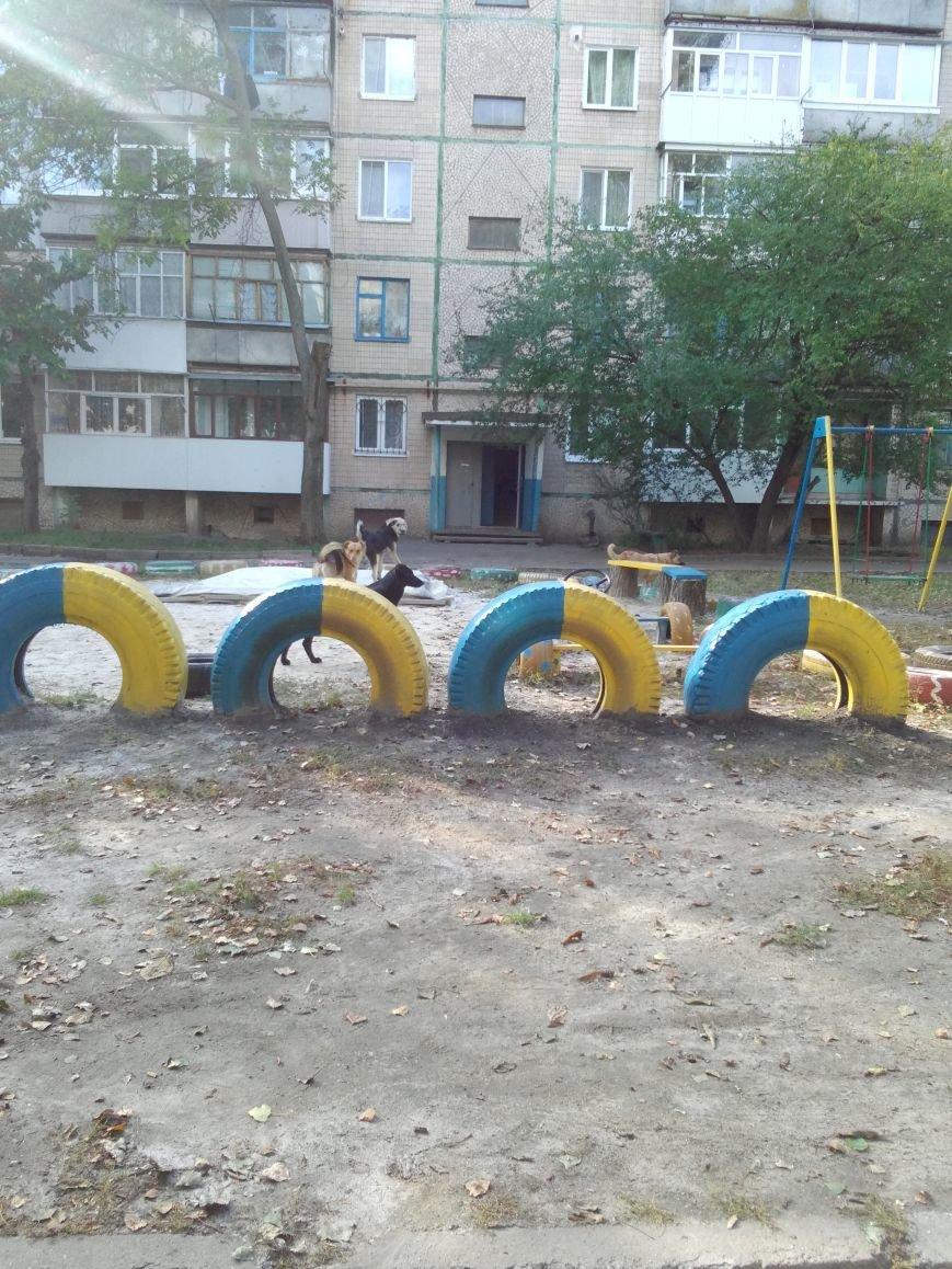 Стаи собак продолжают нападать на жителей областного центра (ФОТО), фото-3