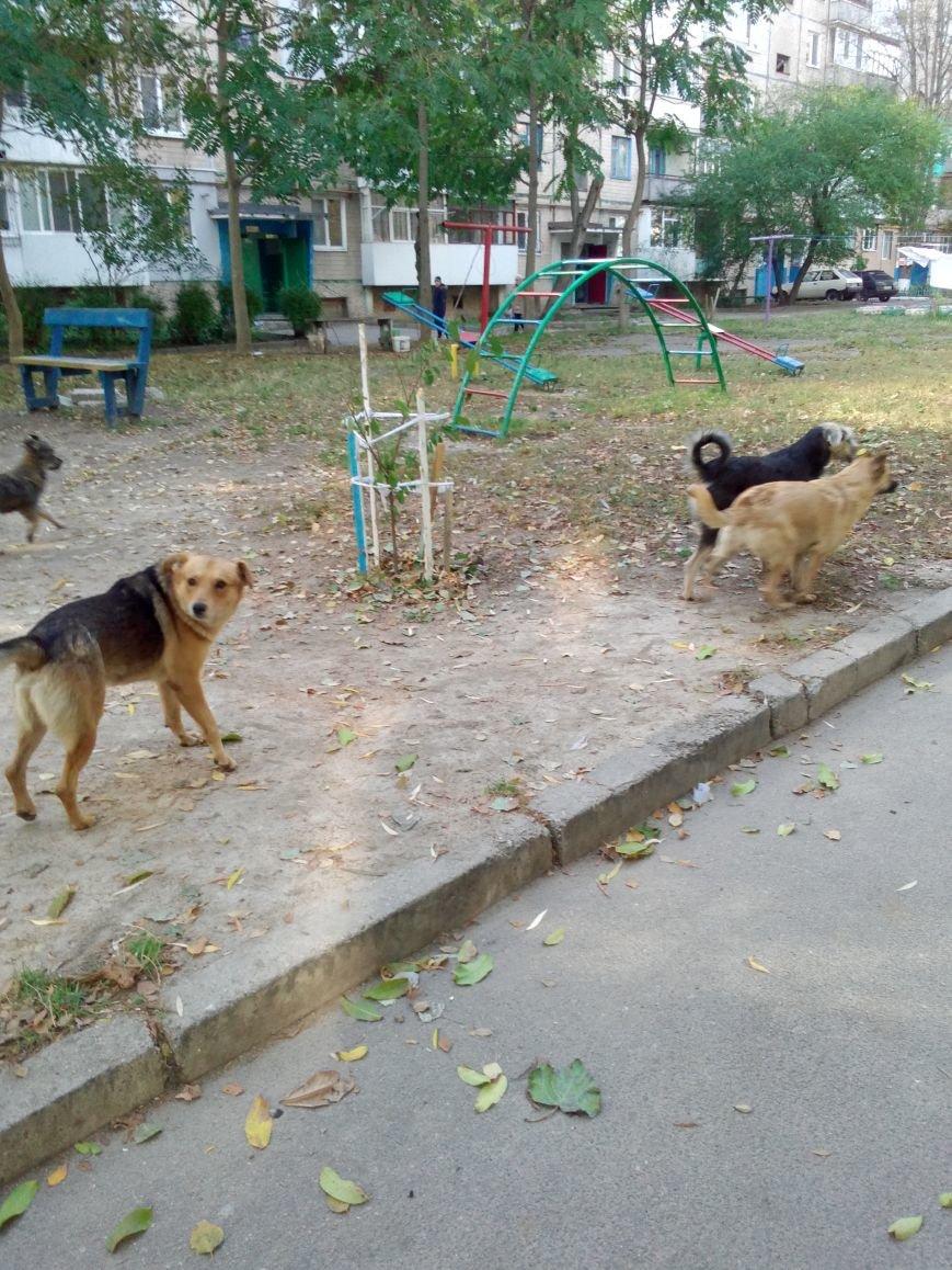 Стаи собак продолжают нападать на жителей областного центра (ФОТО), фото-2