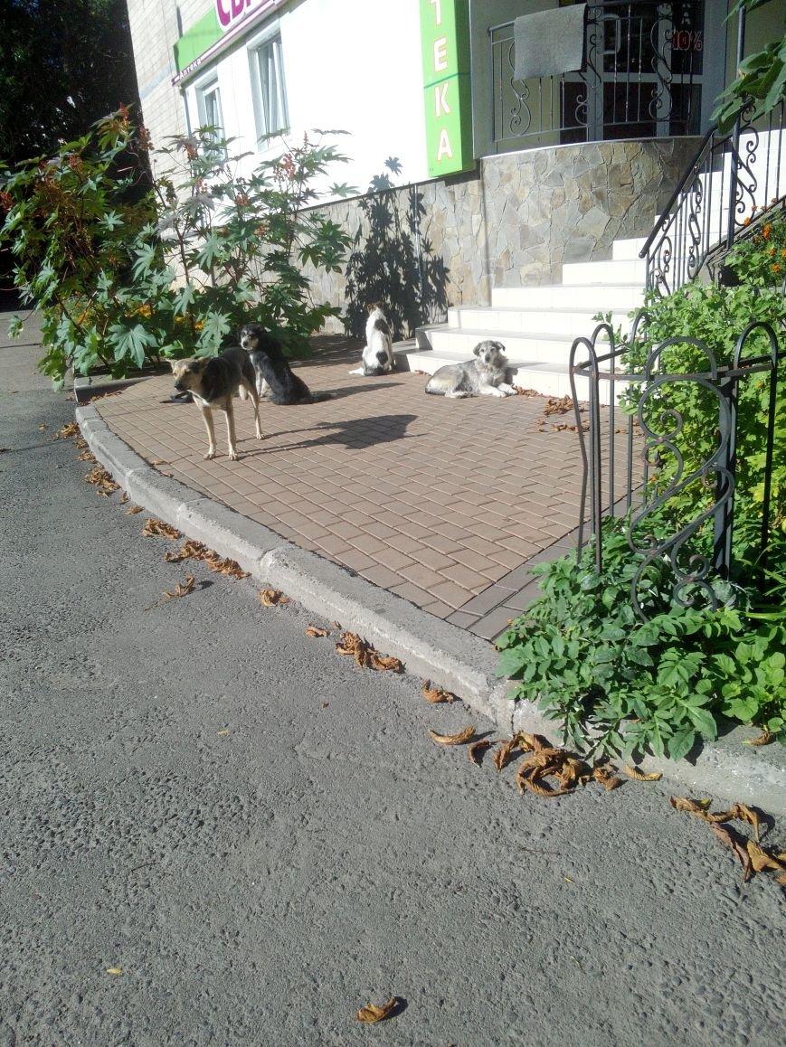 Стаи собак продолжают нападать на жителей областного центра (ФОТО), фото-1