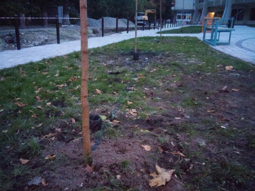 На площі біля цирку висадили райські яблуні та кущі (ФОТО), фото-5