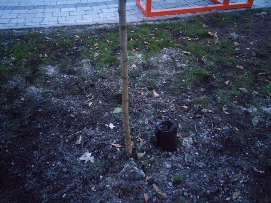 На площі біля цирку висадили райські яблуні та кущі (ФОТО), фото-6