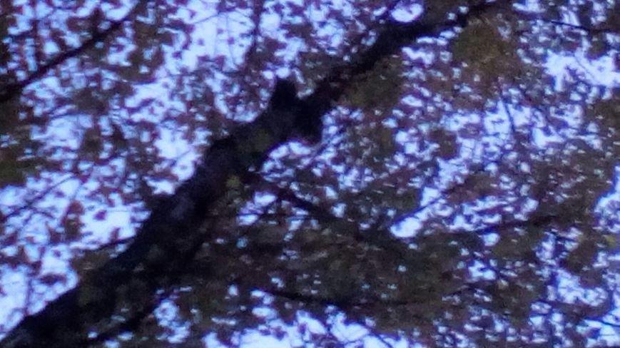 В Каменском спасатели спасли кошку, которая 3 дня просидела на дереве, фото-3