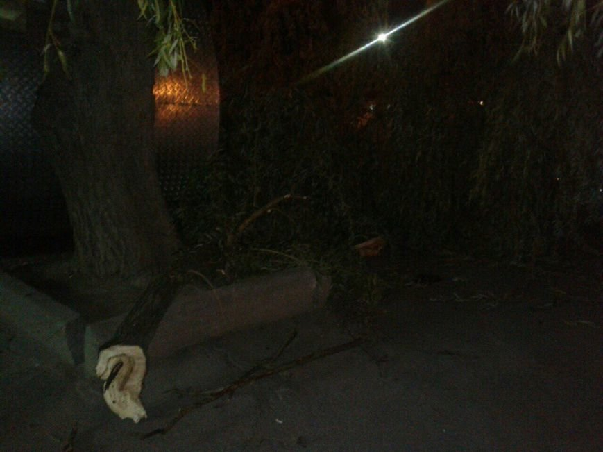 У Тернополі обламалась частина дерева і впала на автомобіль, фото-1