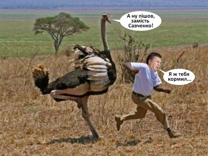 Курьезы недели: Плавающая душегубка Путина, Савченко в обмен на Януковича, Сим Айфон и Волк-Забивака, фото-5