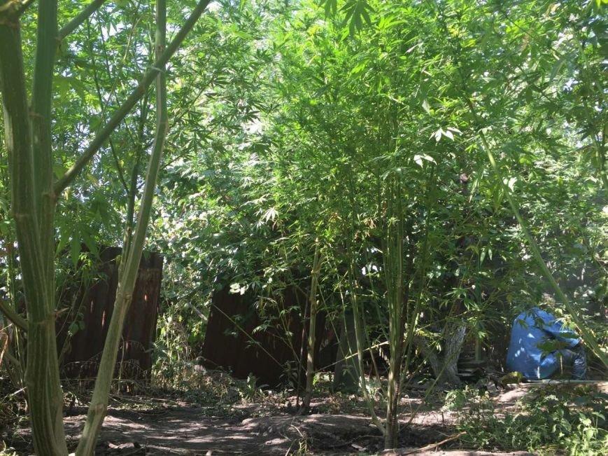 В Запорожской области нашли 150 кустов конопли стоимостью 1,5 млн грн, - ФОТО, фото-1