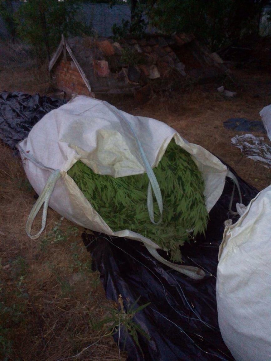 В Запорожской области нашли 150 кустов конопли стоимостью 1,5 млн грн, - ФОТО, фото-2