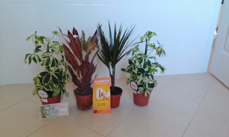 Platinum Bank создаст в больницах Чернигова экологические уголки, фото-4