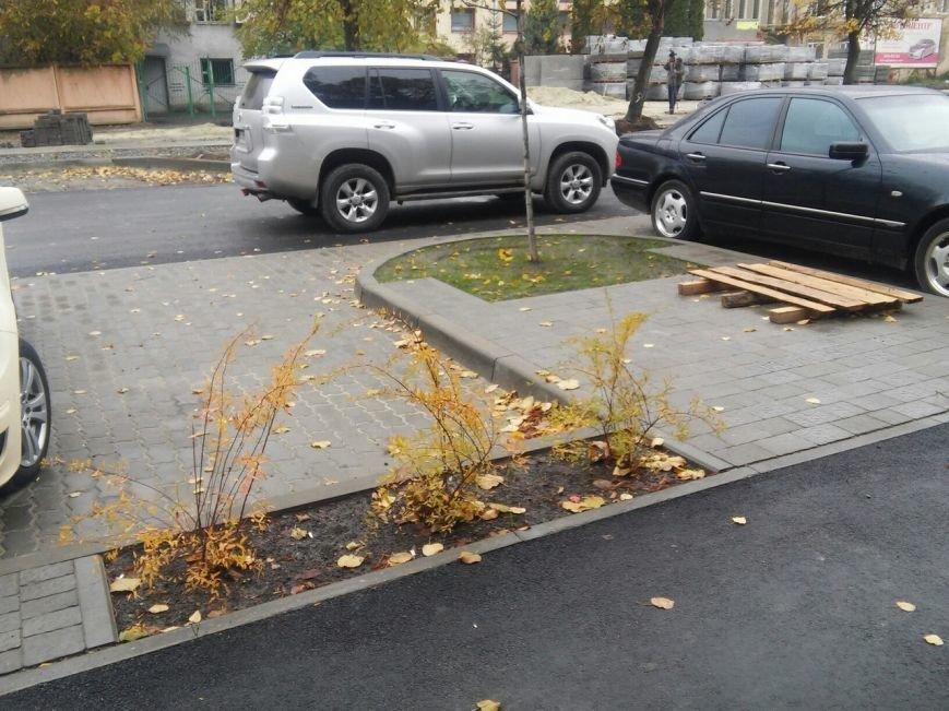 У Львові на вулиці Садовій висадили нові дерева та кущі (ФОТО), фото-1