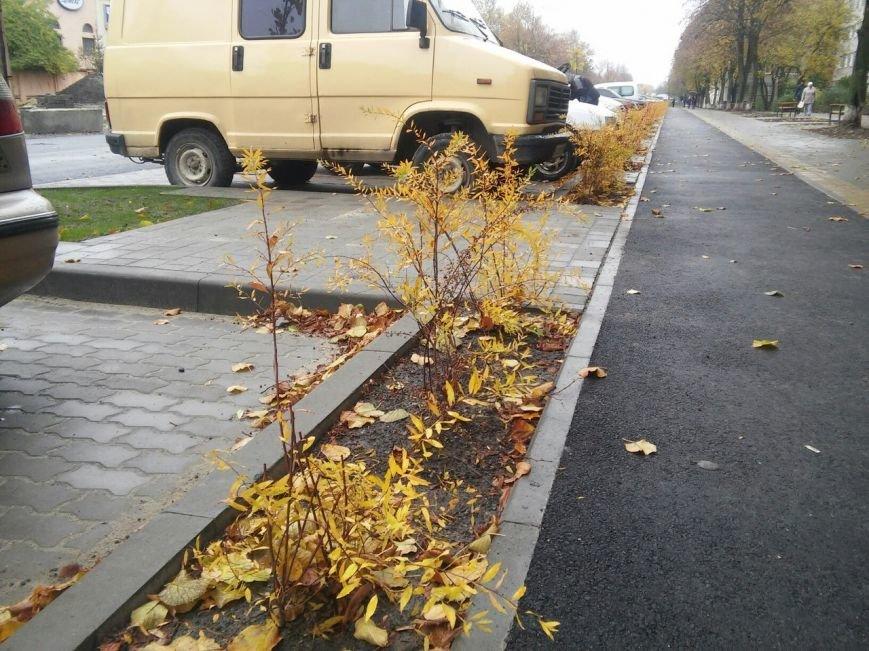У Львові на вулиці Садовій висадили нові дерева та кущі (ФОТО), фото-4
