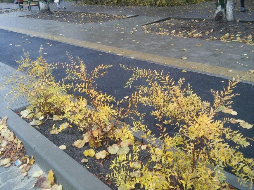 У Львові на вулиці Садовій висадили нові дерева та кущі (ФОТО), фото-3