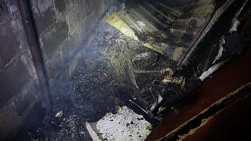 В Мариуполе в горящем доме собака спасла хозяина от смерти (ФОТО), фото-3