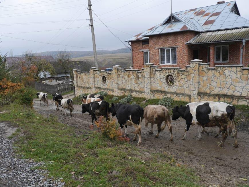 """""""МРІЯ"""" долучилася до відкриття молочного кооперативу «Годувальниця» (Фоторепортаж), фото-26"""