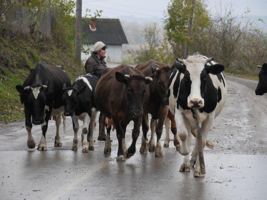 """""""МРІЯ"""" долучилася до відкриття молочного кооперативу «Годувальниця» (Фоторепортаж), фото-24"""