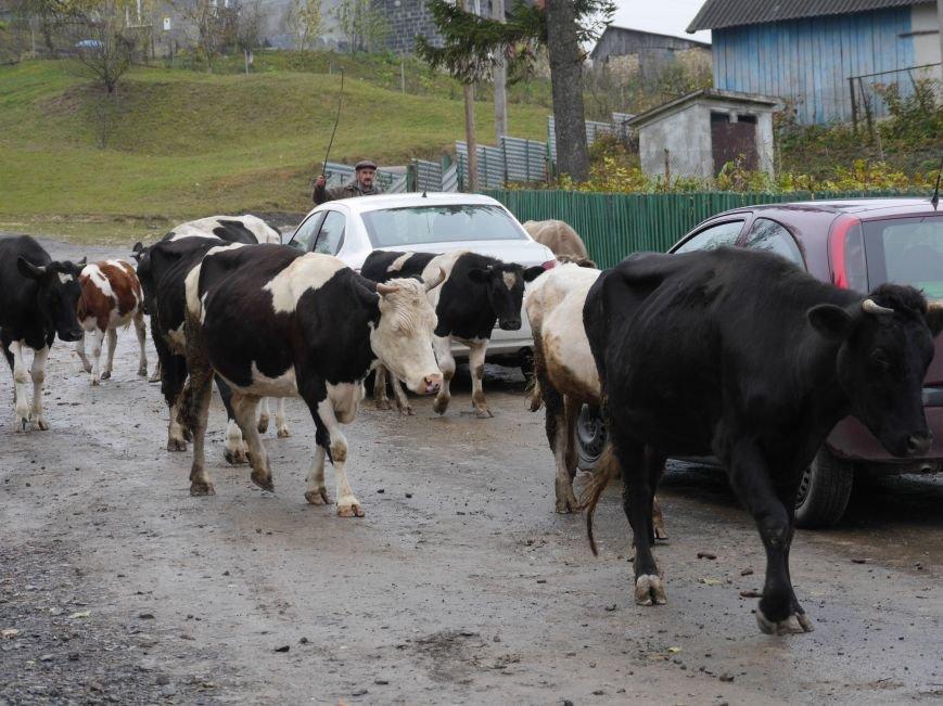 """""""МРІЯ"""" долучилася до відкриття молочного кооперативу «Годувальниця» (Фоторепортаж), фото-25"""