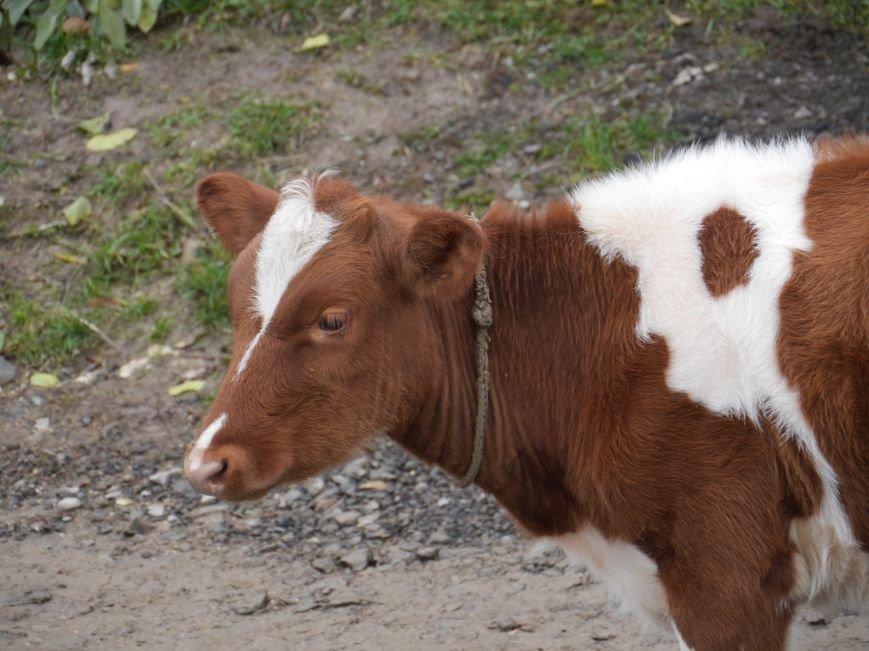 """""""МРІЯ"""" долучилася до відкриття молочного кооперативу «Годувальниця» (Фоторепортаж), фото-28"""