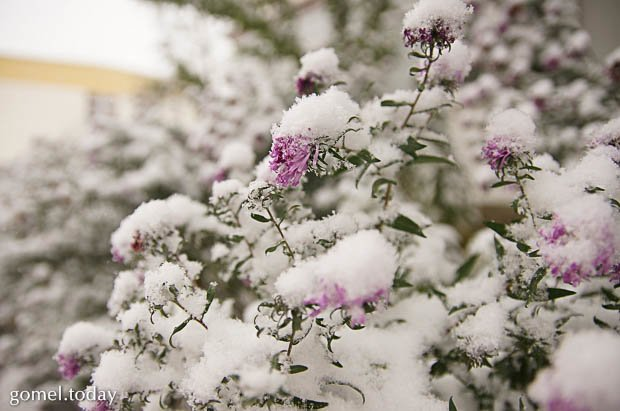 зима3
