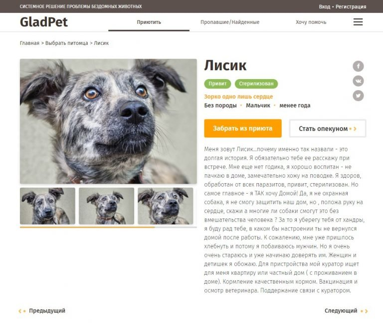 В Одессе запустили сайт, помогающий найти дом животным из приютов, фото-2