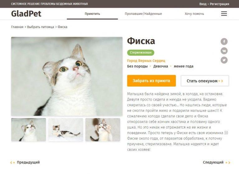В Одессе запустили сайт, помогающий найти дом животным из приютов, фото-1