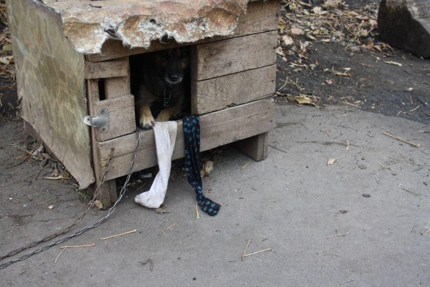 Студенты Бахмута оказали помощь животным из приюта, фото-8