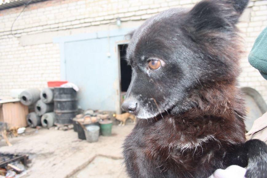 Студенты Бахмута оказали помощь животным из приюта, фото-2