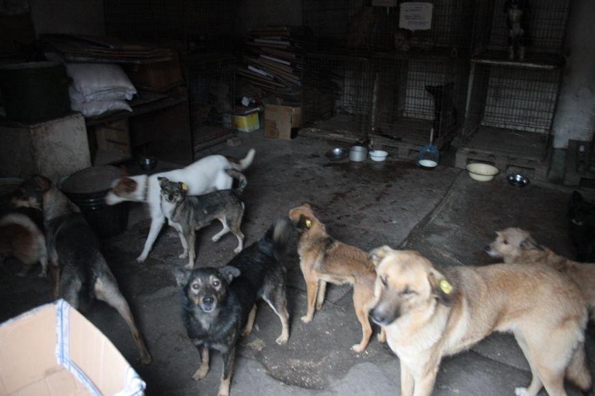 Студенты Бахмута оказали помощь животным из приюта, фото-5