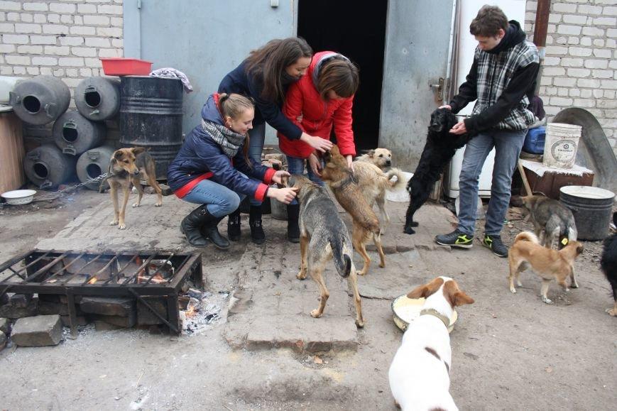 Студенты Бахмута оказали помощь животным из приюта, фото-3
