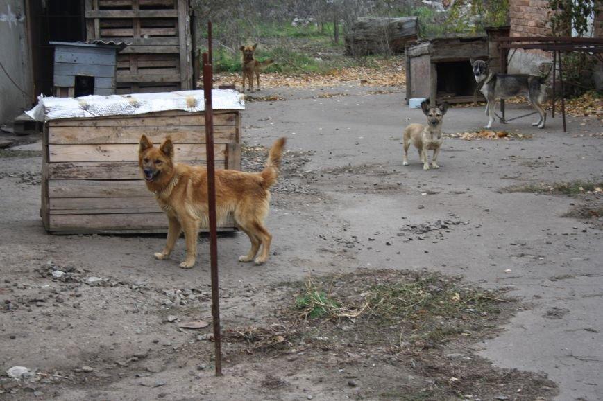 Студенты Бахмута оказали помощь животным из приюта, фото-1