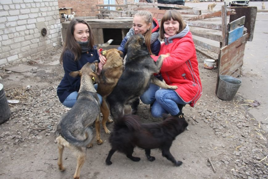 Студенты Бахмута оказали помощь животным из приюта, фото-9