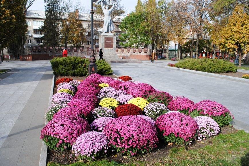 Продолжаем озеленяться: в Кременчуге под зиму высаживают хризантемы, тюльпаны, кусты и деревья (фоторепортаж), фото-1