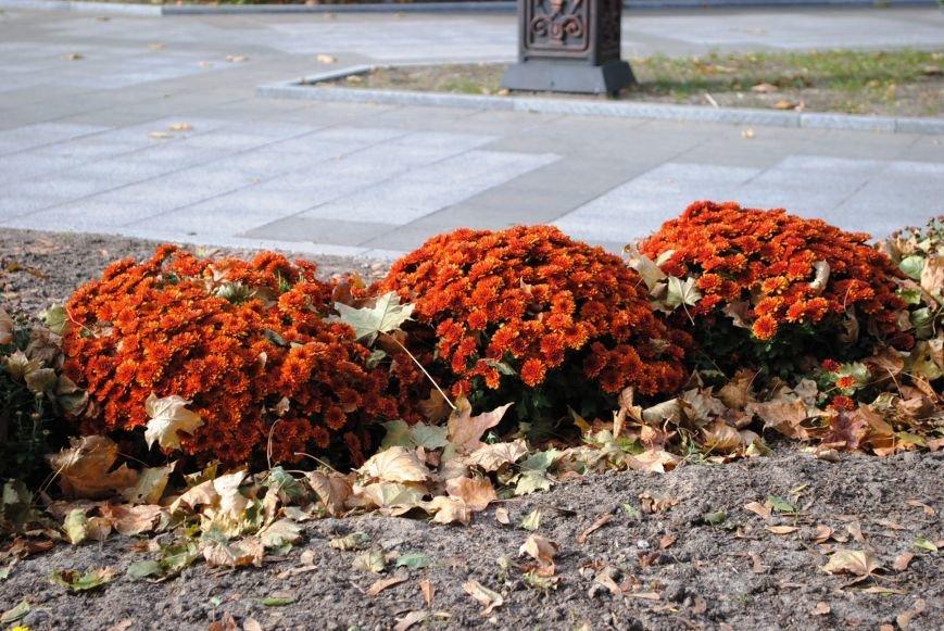 Продолжаем озеленяться: в Кременчуге под зиму высаживают хризантемы, тюльпаны, кусты и деревья (фоторепортаж), фото-18