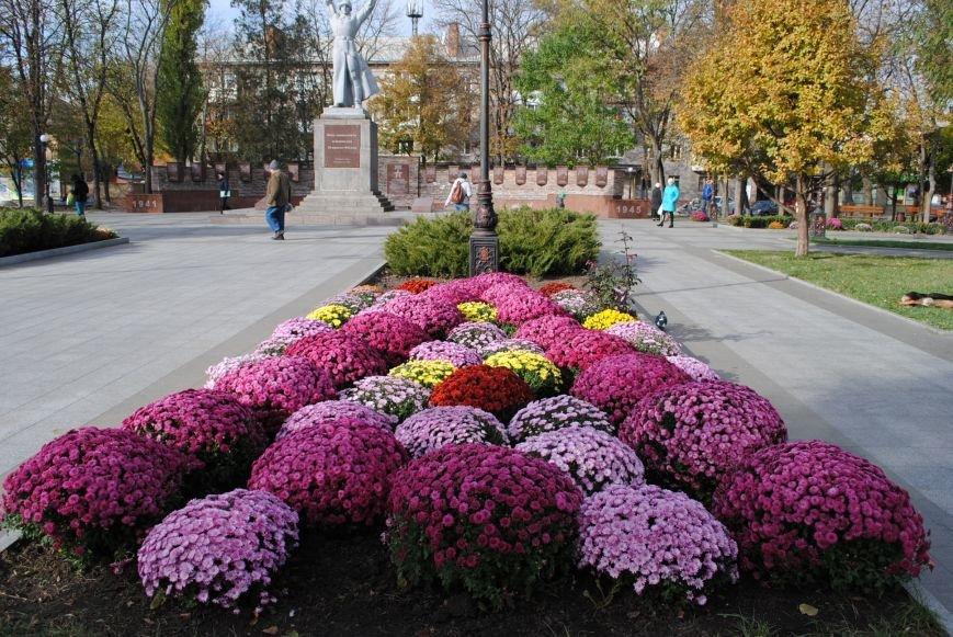 Продолжаем озеленяться: в Кременчуге под зиму высаживают хризантемы, тюльпаны, кусты и деревья (фоторепортаж), фото-8