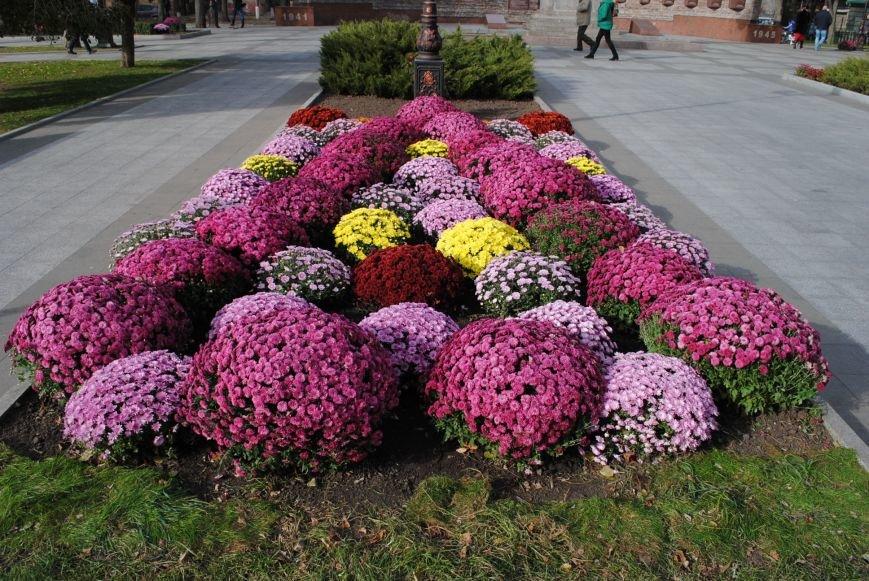 Продолжаем озеленяться: в Кременчуге под зиму высаживают хризантемы, тюльпаны, кусты и деревья (фоторепортаж), фото-2