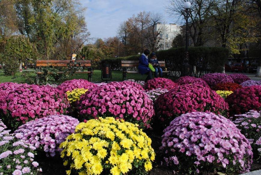 Продолжаем озеленяться: в Кременчуге под зиму высаживают хризантемы, тюльпаны, кусты и деревья (фоторепортаж), фото-7