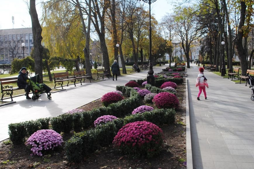 Продолжаем озеленяться: в Кременчуге под зиму высаживают хризантемы, тюльпаны, кусты и деревья (фоторепортаж), фото-17