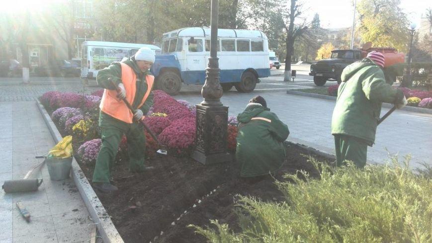 Продолжаем озеленяться: в Кременчуге под зиму высаживают хризантемы, тюльпаны, кусты и деревья (фоторепортаж), фото-21