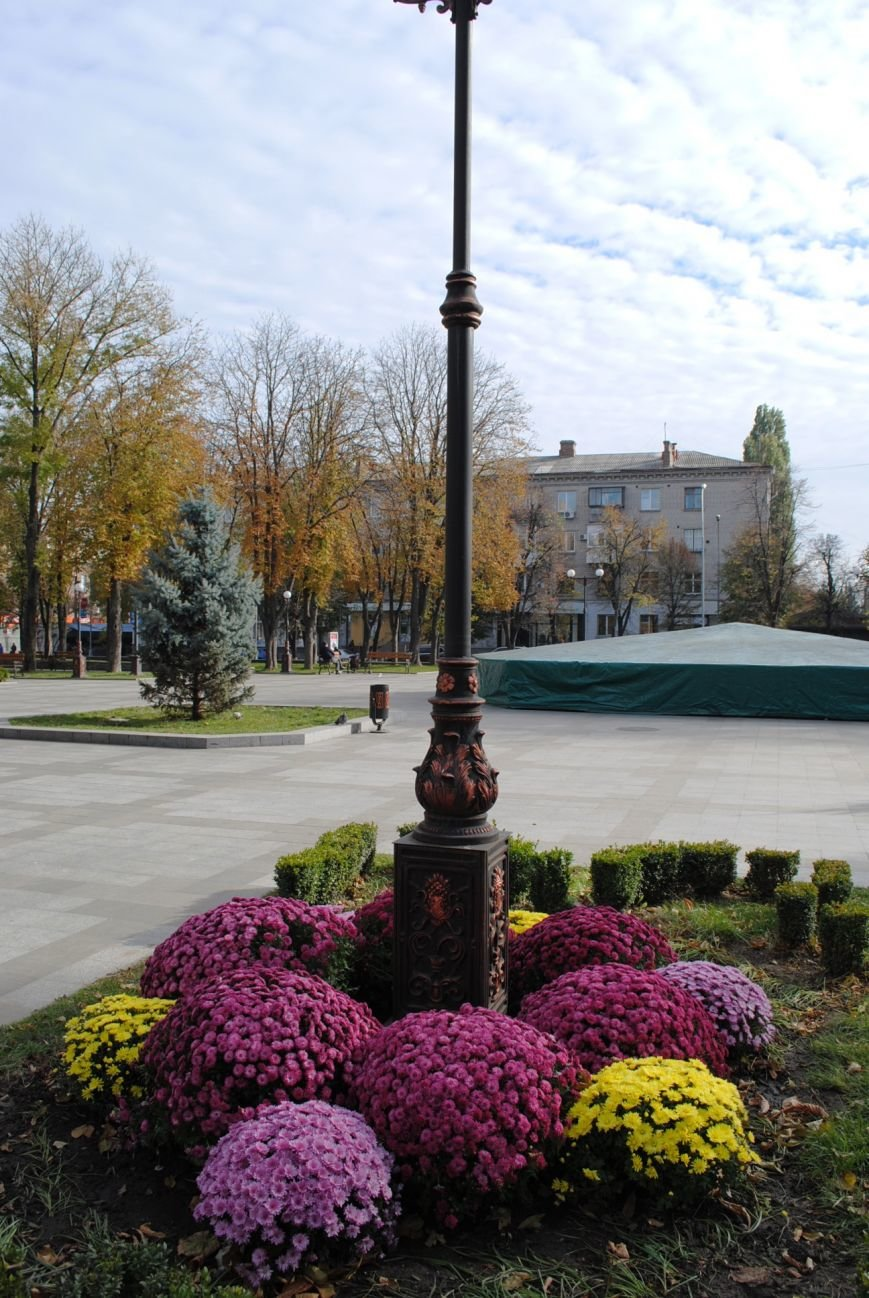 Продолжаем озеленяться: в Кременчуге под зиму высаживают хризантемы, тюльпаны, кусты и деревья (фоторепортаж), фото-14