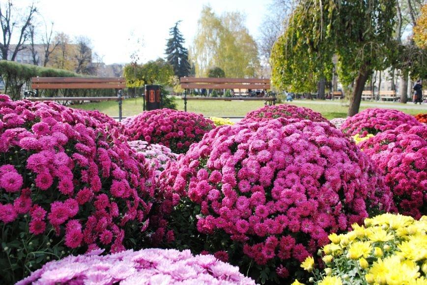Продолжаем озеленяться: в Кременчуге под зиму высаживают хризантемы, тюльпаны, кусты и деревья (фоторепортаж), фото-5
