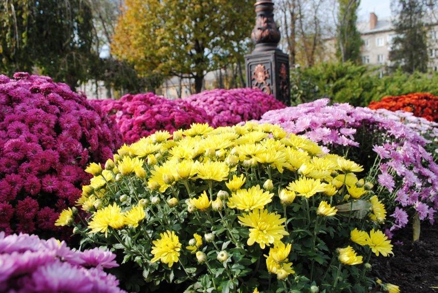 Продолжаем озеленяться: в Кременчуге под зиму высаживают хризантемы, тюльпаны, кусты и деревья (фоторепортаж), фото-4